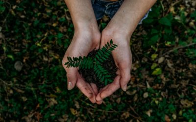 10 Ways You Can Be a More Eco-Friendly Family