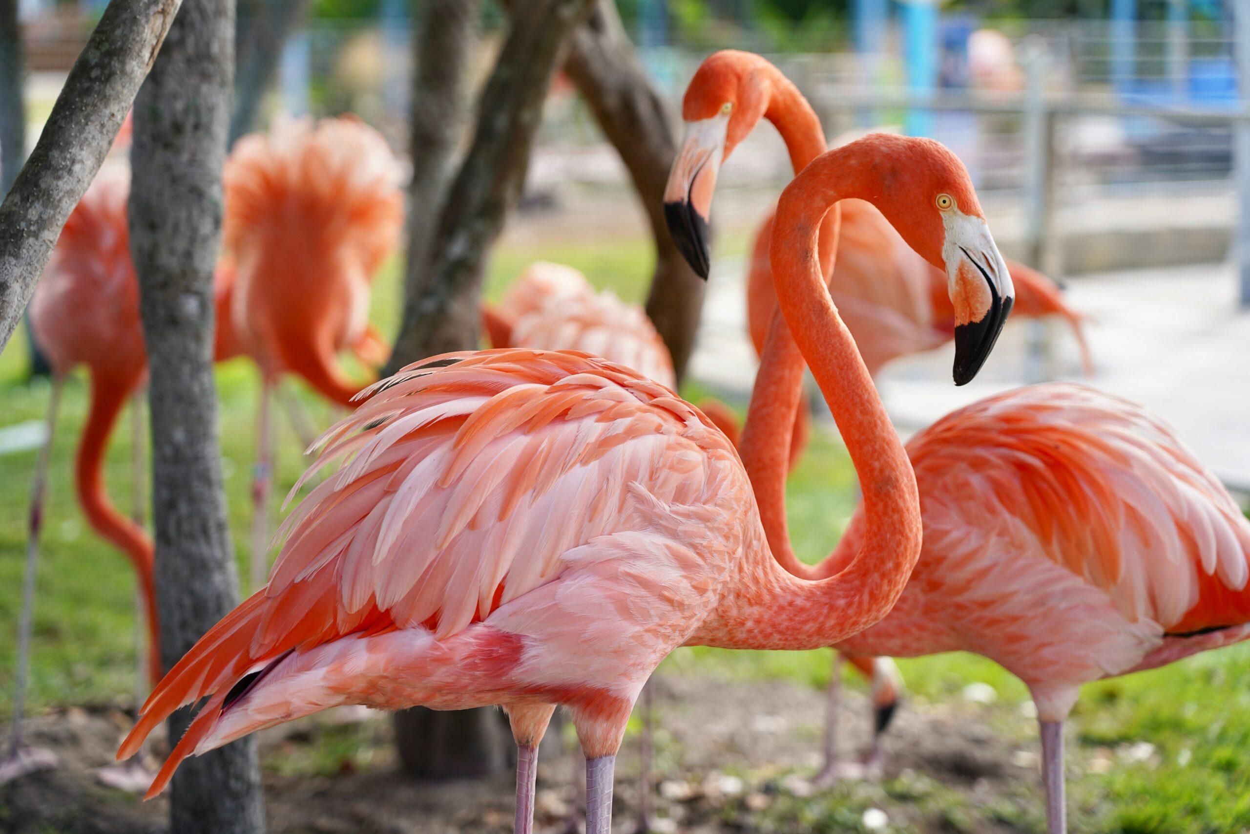 Druscillas Park Flamingo