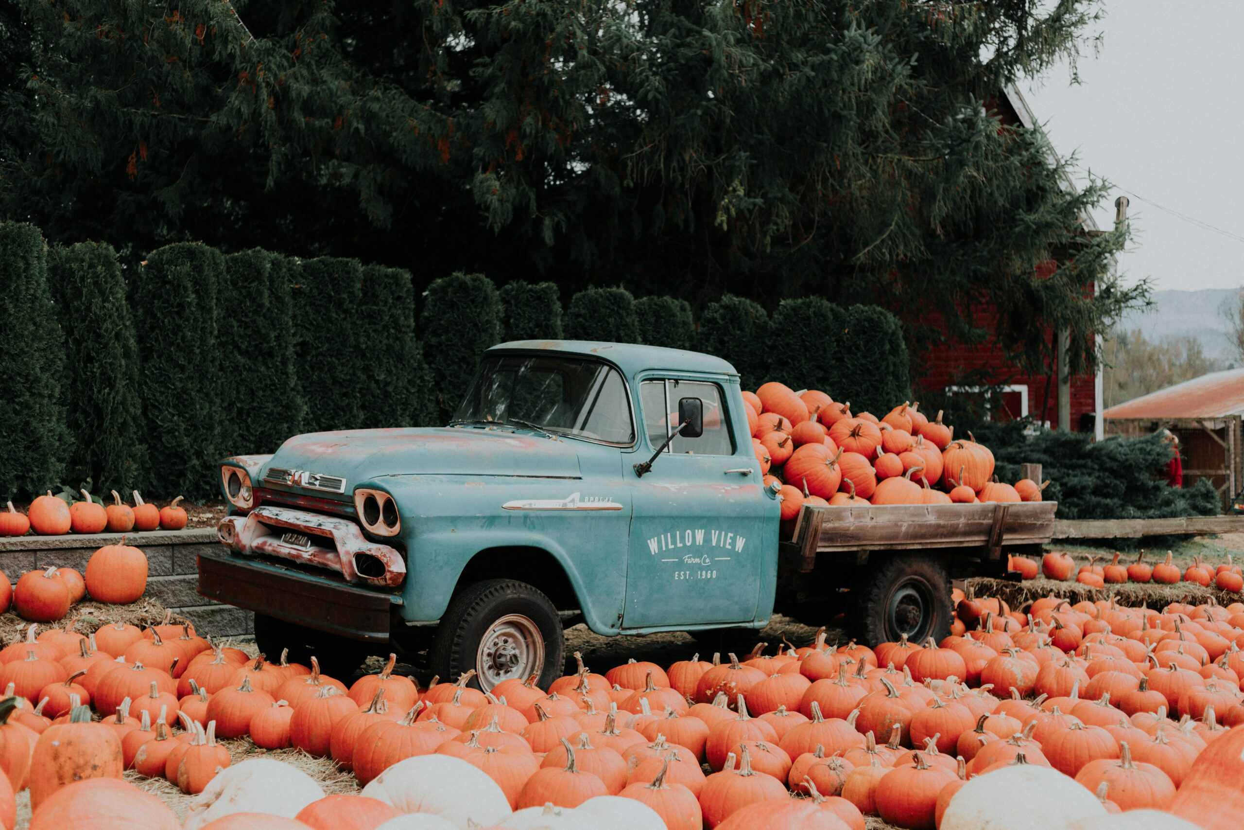 Pumpkin Picking In And Around Worthing 2020