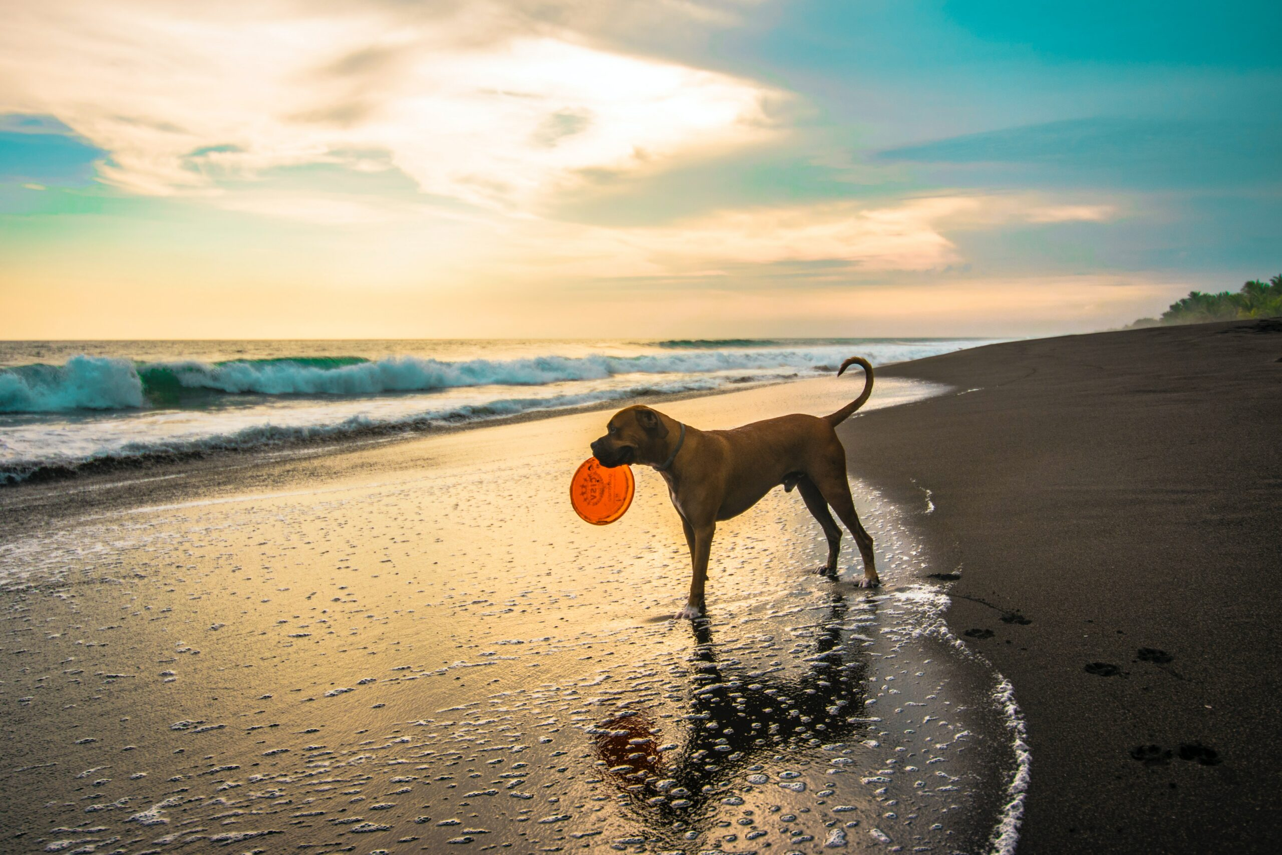 Dog Friendly Beaches in West Sussex