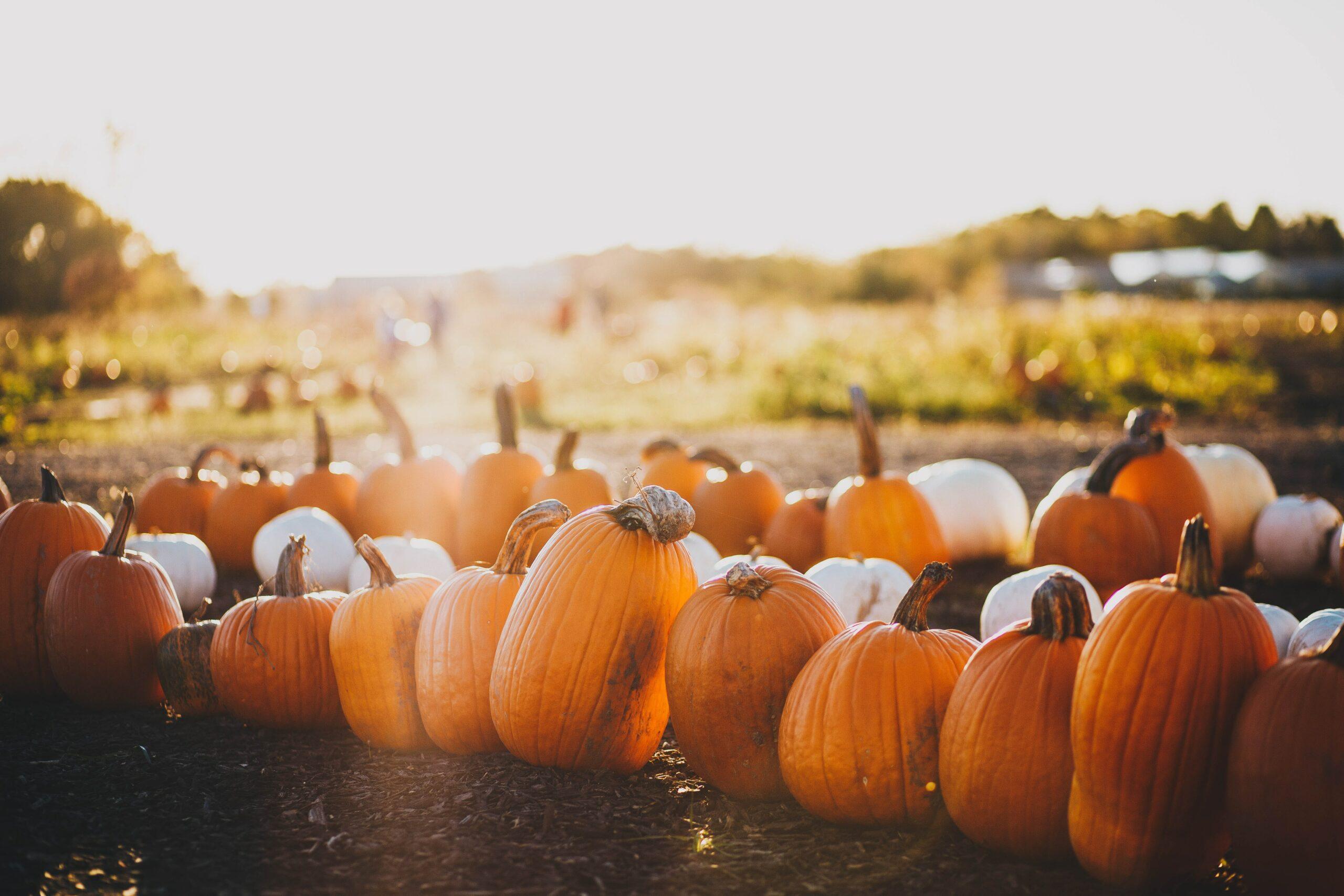 Pumpkin Picking in West Sussex 2021